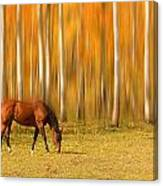 Mystic Autumn Grazing Horse Canvas Print