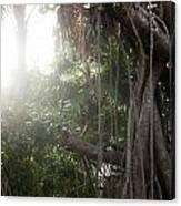 Mystic Jungle Canvas Print