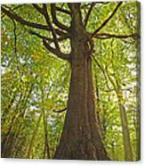 Mystical Forest Tree Canvas Print