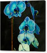 Mystique Blue Orchids Canvas Print