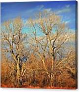 Naked Branches Canvas Print