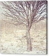 Naked Willow Tree. Winter Poems Canvas Print