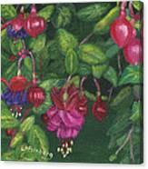 Nancy's Fuchsias Canvas Print