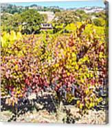 Napa Valleys Best Canvas Print