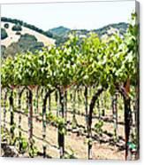 Napa Vineyard Grapes Canvas Print