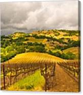 Napa Vineyard Canvas Print