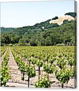 Napa Vineyard With Hills Canvas Print