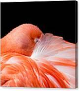 Napping Flamingo Canvas Print