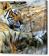 Naptime For A Bengal Tiger Canvas Print