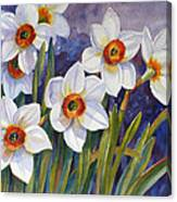 Narcissus Daffodil Flowers Canvas Print