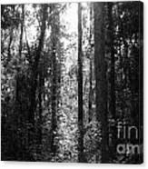 Narrow Path Canvas Print