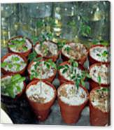 Nasa Germ Free Plant Research Canvas Print