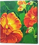 Nasturtiums Canvas Print