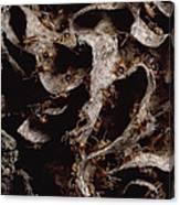 Nasute Termite Nest Amazonian Peru Canvas Print