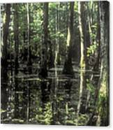 Natchez Trace Cypress Canvas Print