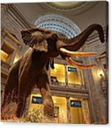 National Museum Of Natural History Canvas Print