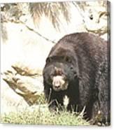 National Zoo - Bear - 12121 Canvas Print