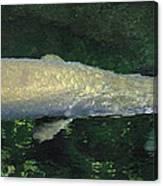 National Zoo - Fish - 12125 Canvas Print