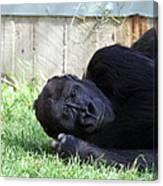 National Zoo - Gorilla - 011339 Canvas Print