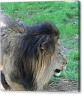 National Zoo - Lion - 01133 Canvas Print