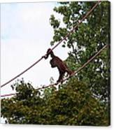 National Zoo - Orangutan - 01135 Canvas Print