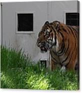 National Zoo - Tiger - 011323 Canvas Print