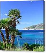 Native Fan Palms In Sant Elm Canvas Print
