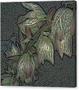 Native Plant 1 Canvas Print
