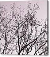 Native Texas Pecan Silhouette Canvas Print