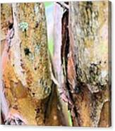 Natural Abstract Crepe Mertle Canvas Print