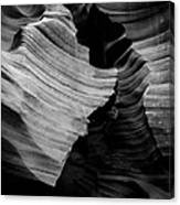 Natural Beauty Of Antelope - Black And White Canvas Print