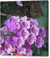 Natural Bouquet Bunch Of Spiritul Purple Flowers Canvas Print