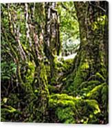 Natural Emeralds. I Wicklow. Ireland Canvas Print