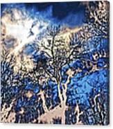 Natural Highlights Canvas Print