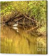 Natural Reflection Canvas Print