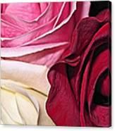 Natural Roses Canvas Print