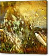 Nature #13. Calling You Canvas Print
