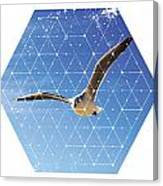 Nature And Geometry - The Seagull Canvas Print