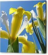 Nature Art Prints Yellow White Irises Flowers Canvas Print