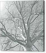 nature - art - Winter Sun  Canvas Print
