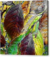 Nature Has Been Recycling For Ages  Canvas Print