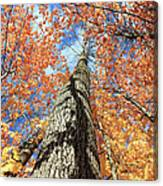 Nature In Art Canvas Print