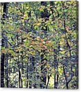 Nature In Autumn 2012 Canvas Print