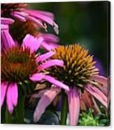 Nature Made Echinacea Canvas Print