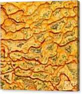 Nature Pattern Iron Oxide Mineral Sediment Crust Canvas Print