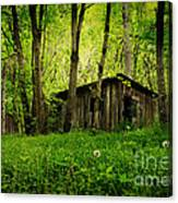 Nature Reclaims Canvas Print