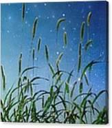 Nature Sparkles Canvas Print