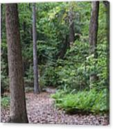 Nature Trail Canvas Print