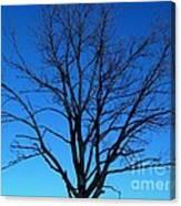 Nature Tree Canvas Print