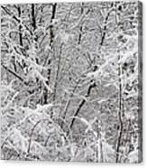 Nature's Blanket Canvas Print